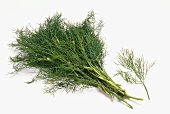 A bunch and a sprig of fresh dill