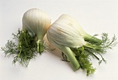 Two fennel bulbs with leaves