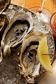 Oysters on ice with wedge of lemon