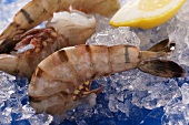 King prawns without heads on ice with lemon
