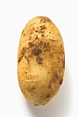 A potato with soil