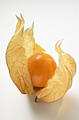 A Physalis with calyx