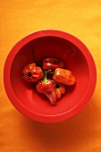 Habanero chili peppers in red bowl