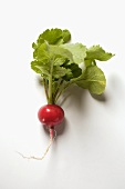 A radish