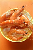 Shrimps in bowl with ice cubes