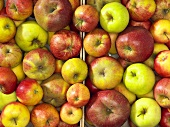 Different types of apples in two crates (overhead view)