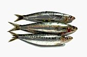 Three sardines, photographed with special effect