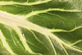 Chard leaf (detail)
