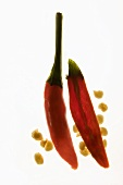 Two chili peppers, backlit