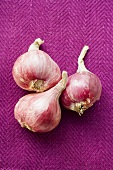 Three red onions on purple background