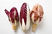 Three different types of radicchio