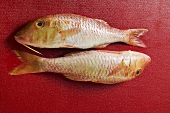 Two red mullet on red background