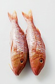 Two fresh red mullet