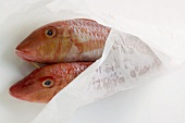 Fresh red mullet in wrapping paper
