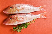 Fresh red mullet on red background