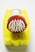 Sponge and brush