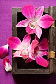 Thai table decoration: orchids in wooden box