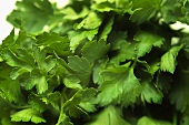 Flat-leaf parsley (close-up)
