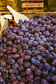 Plums from Styria on a market stall