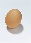 A Single Brown Egg