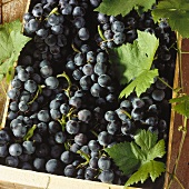 Black table grapes with leaves in a crate (close-up)