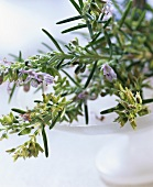 Rosemary with flowers in a white bowl