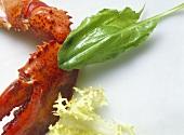Lobster; Arugala & Curly Endive