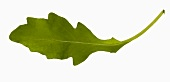 A rocket leaf