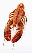 Boiled lobster