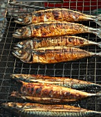 Several Saba fish on a grill rack
