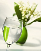 Glass of water in front of lilies of the valley