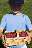Boy holding woodchip basket of fresh raspberries