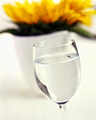 A glass of water in front of a flower