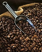 Coffee beans with metal scoop in sack