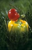 Eine gelbe Paprikaschote und eine Tomate im Gras