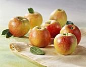 Seven apples with leaves (variety: Braeburn)