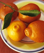Several mandarin oranges with twig and leaves on a plate