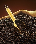 Roasted coffee beans with golden scoop in jute sack