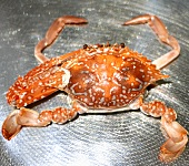 A crab (cooked)