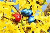 Forsythia with chocolate eggs