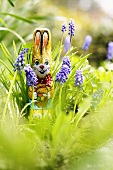 Grape hyacinths with chocolate Easter Bunny