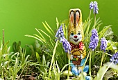 Grape hyacinths with chocolate Easter Bunny & chocolate eggs