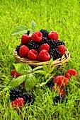 Fresh raspberries and blackberries in a basket