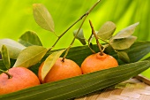 Tangerines on palm leaf