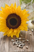 Sunflower, unshelled sunflower seeds and sunflower oil