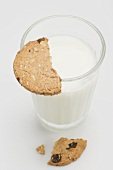 A glass of milk with a piece of wholemeal biscuit