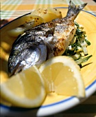 Sea bream with lemon sauce