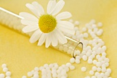 Chamomile flower with homeopathic remedy (globuli)