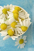 Chamomile flowers in a dish