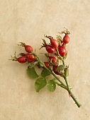 Spray of rose hips on beige background